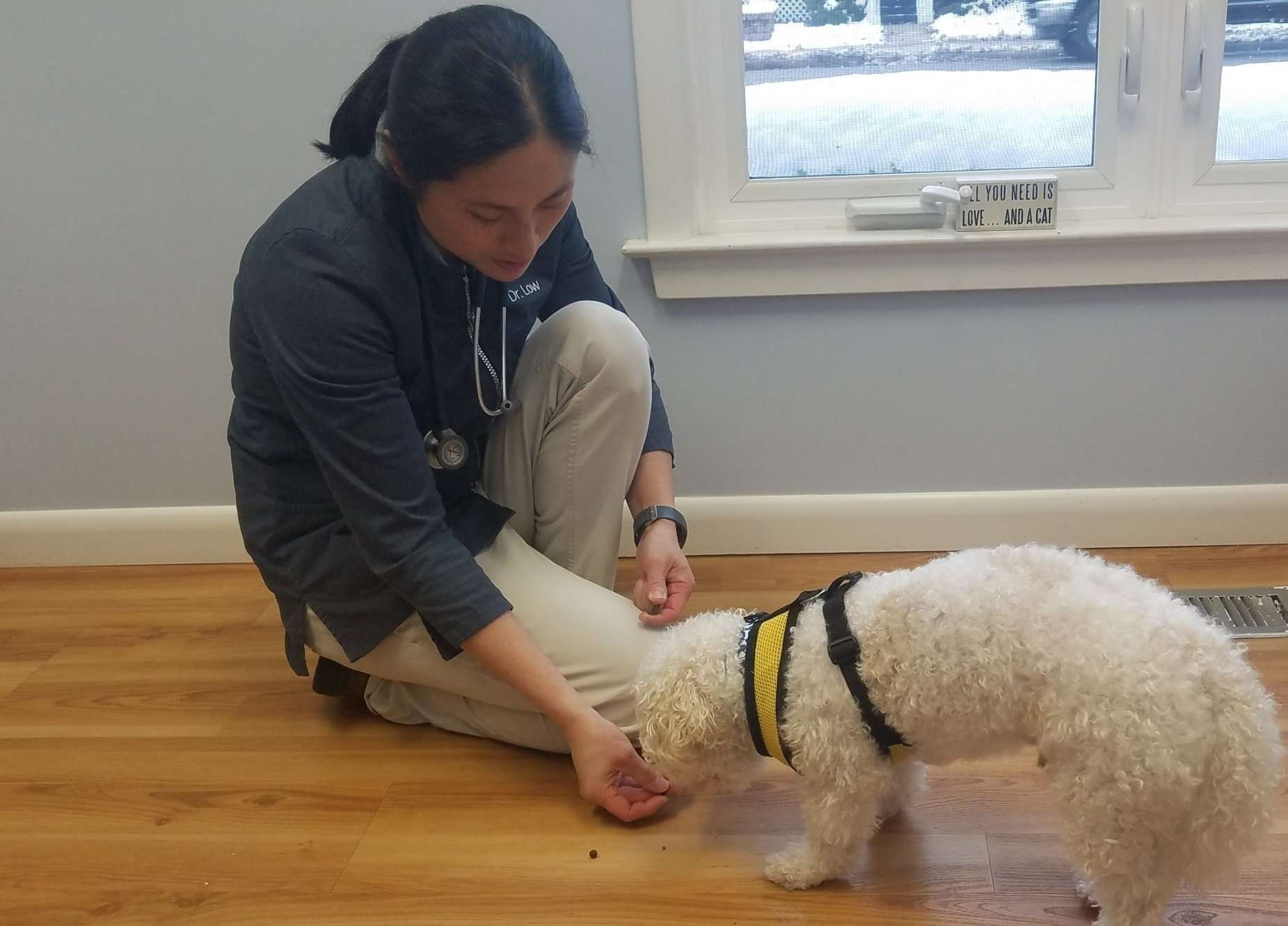 Kenzo Trotter, a rescue dog with Lend A Helping Paw Shih Tzu Rescue, at the vet