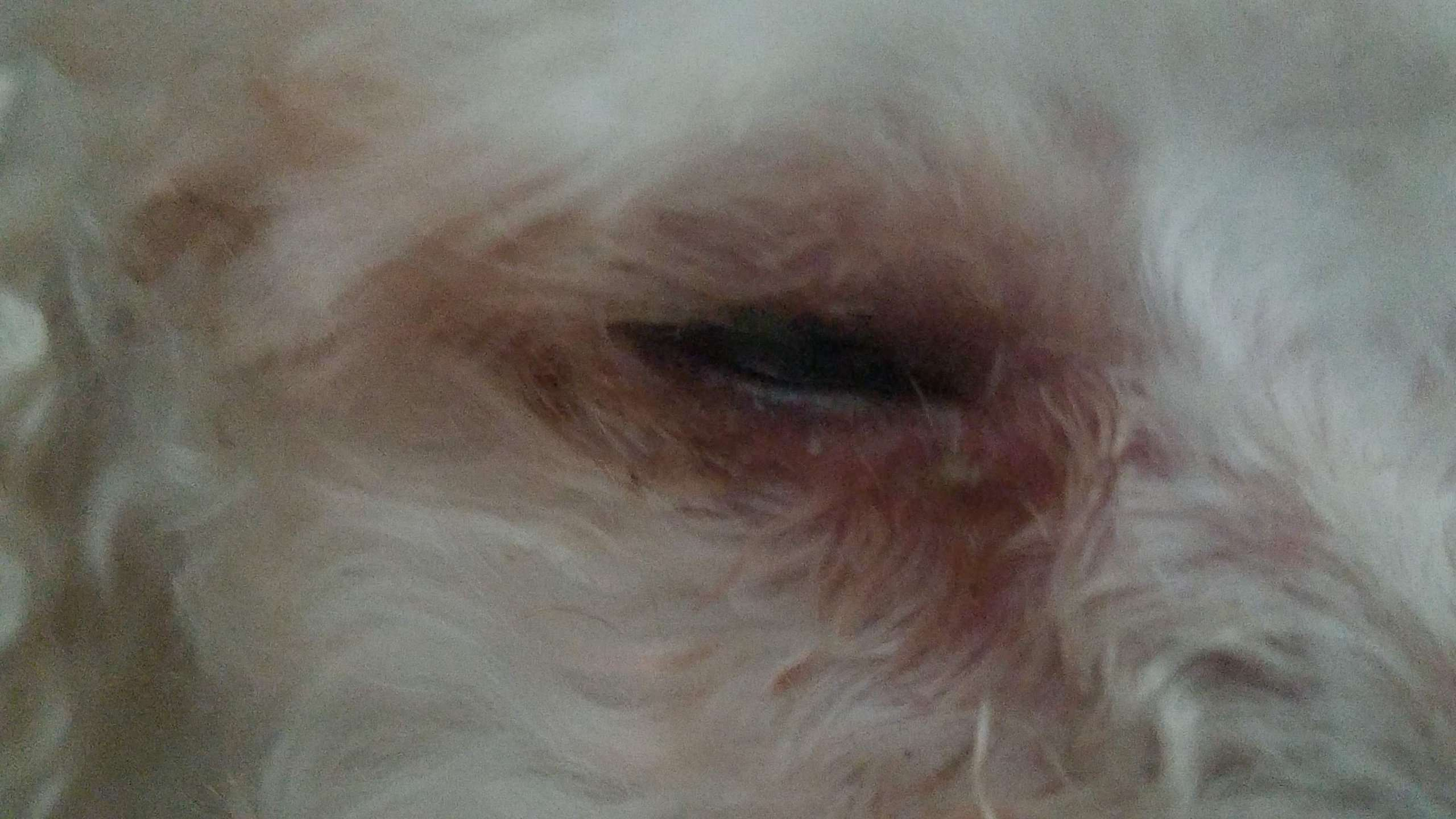 Kenzo Eye 20190703 tear staining