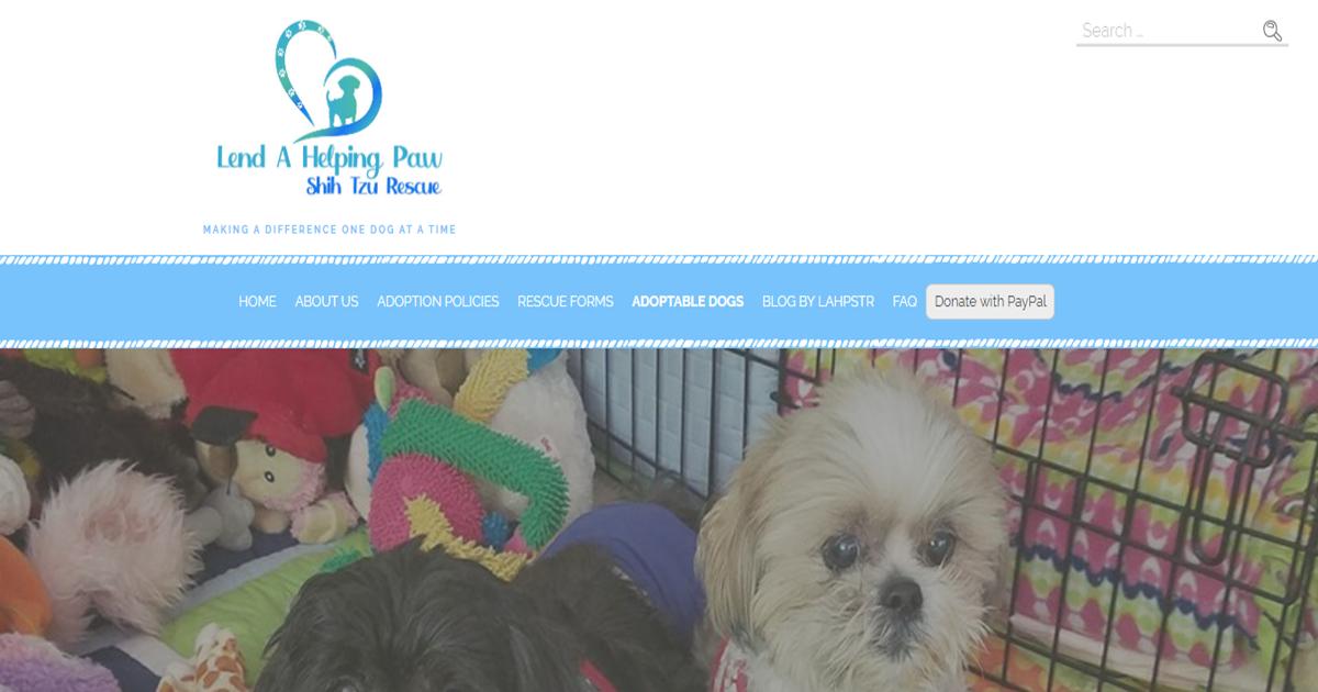 Shih Tzu Dogs For Adoption In Virginia Usa Page 1 10 Per Page Puppyfinder Com
